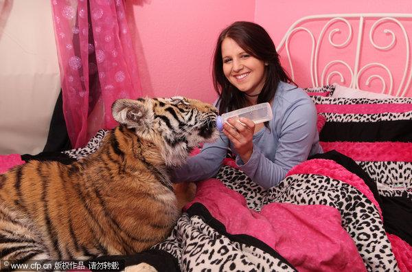 Girl sleeps with a Bengal tiger in her bed