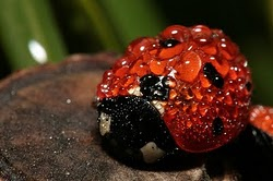 Interesante Facts About The Ladybug
