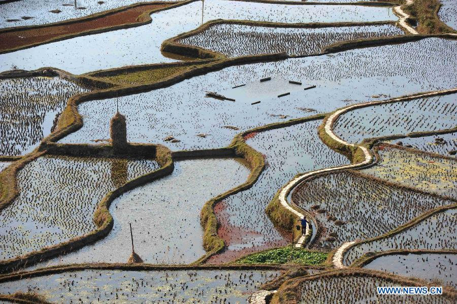 Beautiful scenery of terraced fields in China