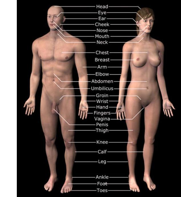 Top 15 Amazing Facts About The Human Body