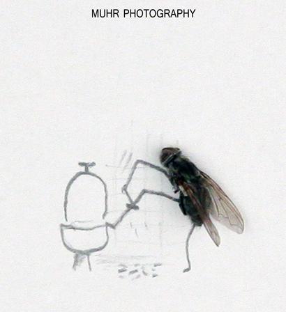 Dead Flys Art